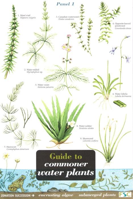 Plant identification charts mersnoforum plant identification charts mightylinksfo