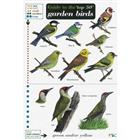 Top 50 Garden Birds (Identification Chart)