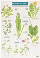 Playing Field Plants (Identification guide)