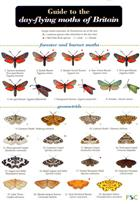 A Guide to the Day-flying Moths of Britain (Identification Chart)