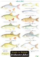 Guide to British freshwater Fishes (Identification Chart)
