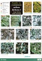 Guide to common urban lichens 1 (on trees and wood) (Identification Chart)