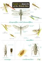 Guide to insects of the British Isles (Identification Chart)