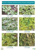Guide to mosses and liverworts of towns and gardens (Identification Chart)