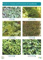 Guide to mosses and liverworts of woodlands (Identification Chart)
