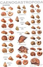 An illustrated guide to the land snails of the Western Ghats of India