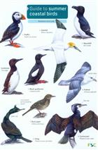 Guide to Summer Coastal Birds (Identification Chart)