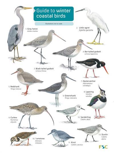 Guide To Winter Coastal Birds Identification Chart