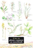 A Key to Plants Common on Moorlands (Identification Chart)