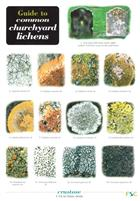Guide to Common Churchyard Lichens  (Identification Chart)