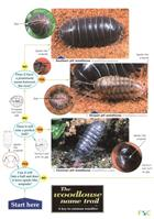 The Woodlouse Name Trail (Identification Chart)