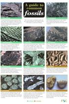 A Guide To Common Fossils Identification Chart