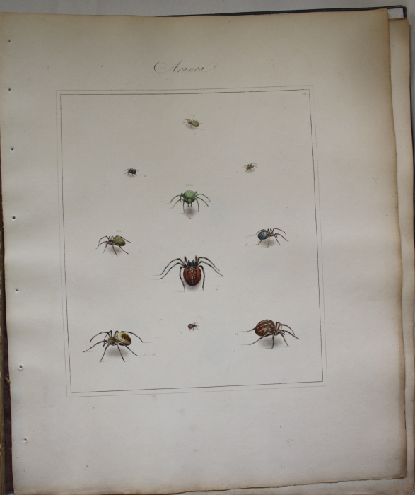 MARTYN, THOMAS - Aranei, or a natural history of Spiders including the principal parts of the well known work on English Spiders by Eleazar Albin as also the whole of the celebrated publication on Swedish Spiders by Charles Clerck, revised, enlarged and designed anew